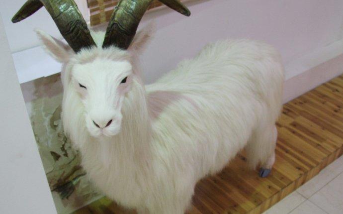 Большой размер козий модель/модели овец/украшения животных